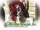 Hensler's Christmas