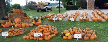 Blake's Pumpkins_1