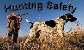 A hunter with his German Shetland hunting pheasant and quail.