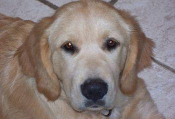 Max-lost dog