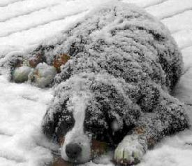 Extremen-Cold-weather-pets