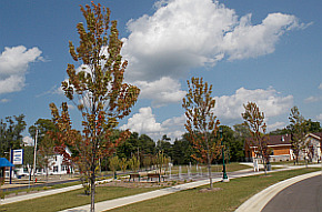RiverPark_Trees