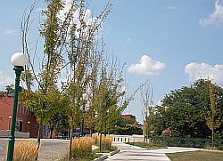 SouthGateway_deadTrees