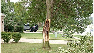 Purdue_Tree,major damage