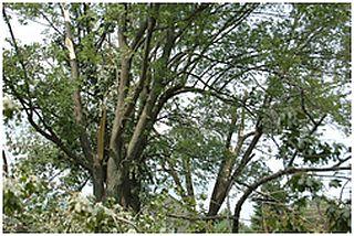 Purdue_tree,low risk